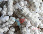 New Crop fresh pure white garlic or normal white garlic